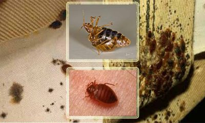 How To Check If You Have Bed Bugs